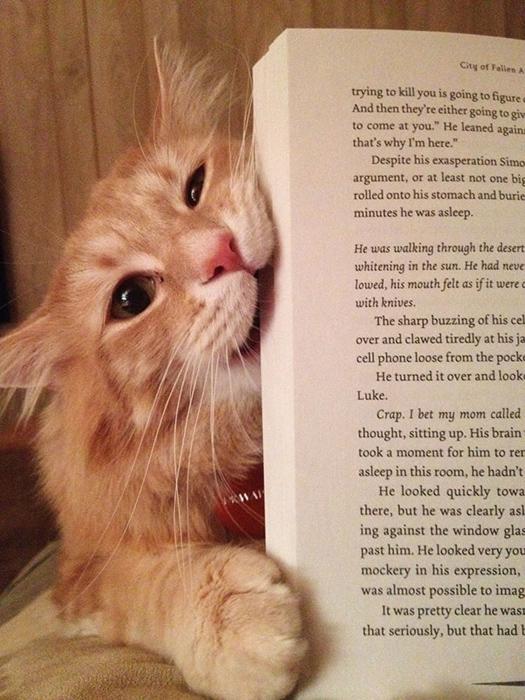 Когда хозяин открывает книгу, кот Ватсон пытается ее съесть.