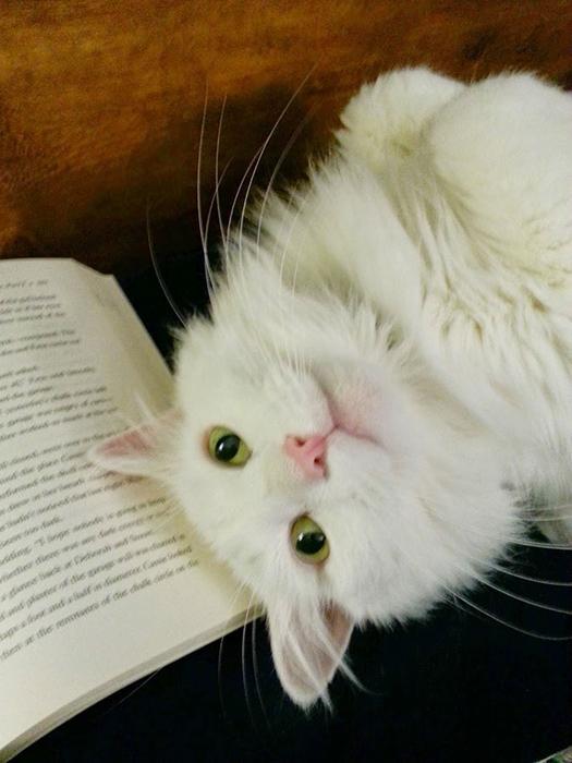 Ты не хочешь читать, ты не хочешь читать...