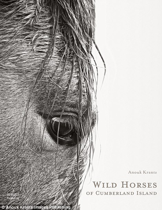 Свои фотографии фотограф Анук Кранц выпускает отдельной книгой под названием Wild Horses of Cumberland Island.