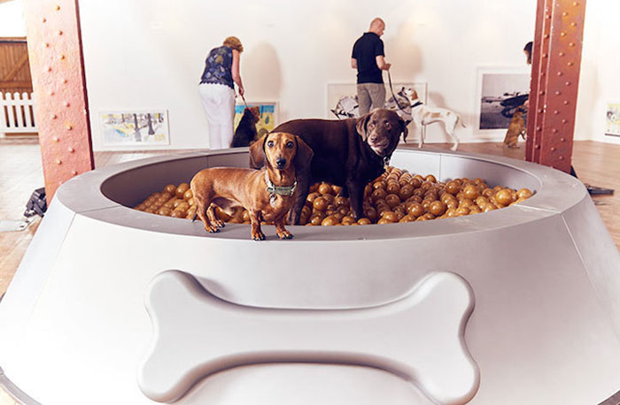 Огромная миска для еды с воздушными шариками.