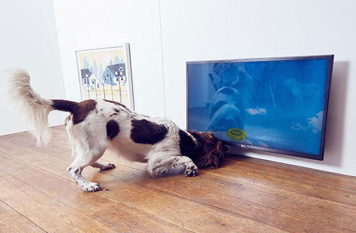 Инсталляция Catch - *Улов*. Собака пытается поймать виртуальное фрисби.