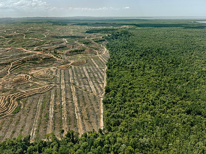 Пальмовая плантация, Борнео, Малайзия, 2016 год.