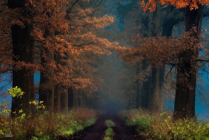 Дорога шамана на другую сторону. Автор фото: Janek Sedlar.
