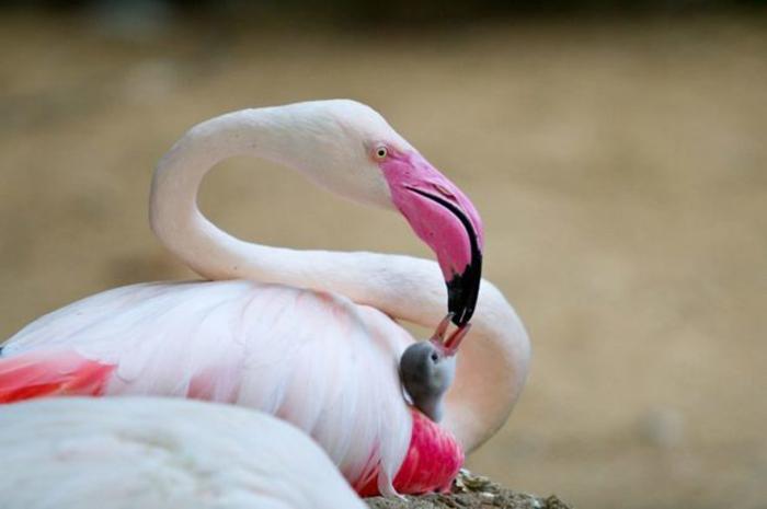 Взрослая птица кормит своего птенца.