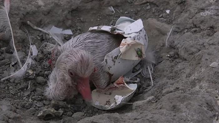 Из-за засухи взрослым птицам пришлось улететь.