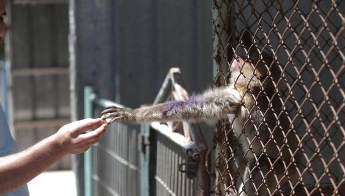 Животные в зоопарке Хан-Юнис остались без присмотра и без еды.