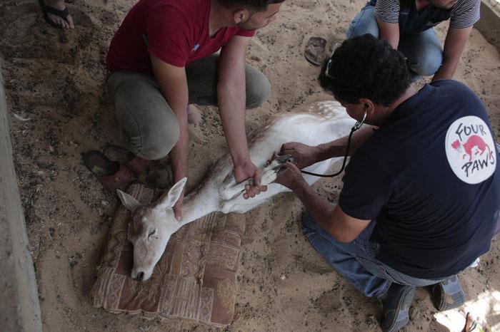 Группа спасения помогает оставшимся в живых животным.