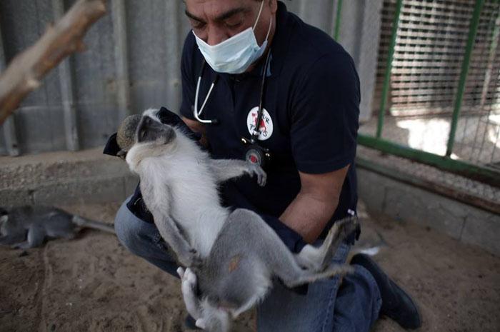 Спасатели прибыли в июне в зоопарк Хан-Юнис, чтобы привезти животным еду и предоставить им медицинское обслуживание.
