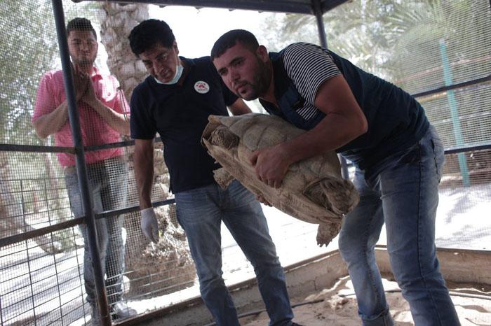 Спасатели накормили страдающих от голода черепах.