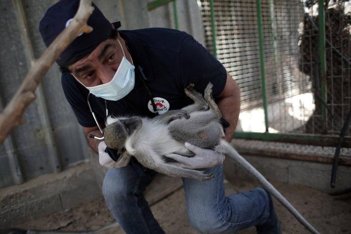 Животные в зоопарке остро нуждаются в медицинской помощи.