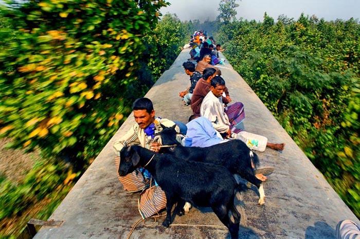 Некоторые пассажиры перевозят на крыше поезда даже домашних животных. Автор фото: GMB Akash.