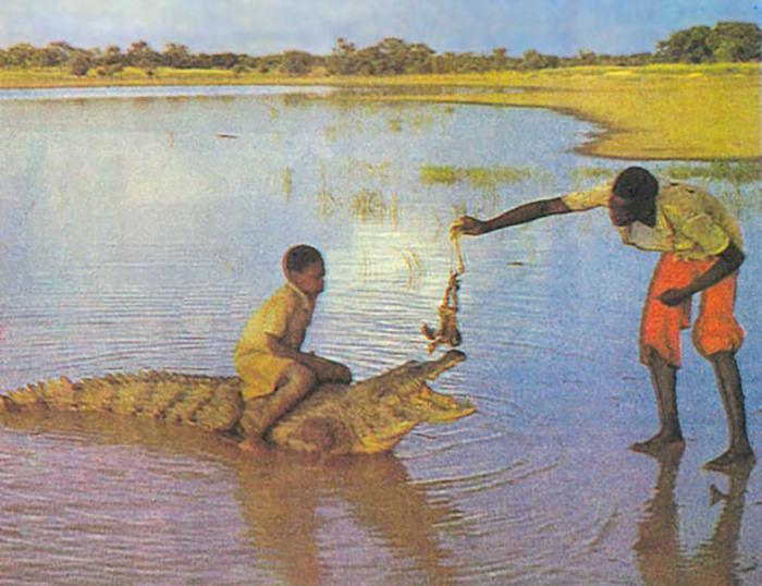 Дети оседлали крокодила - старая открытка из Базуле, Буркина-Фасо.