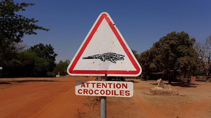 Осторожно, крокодилы.