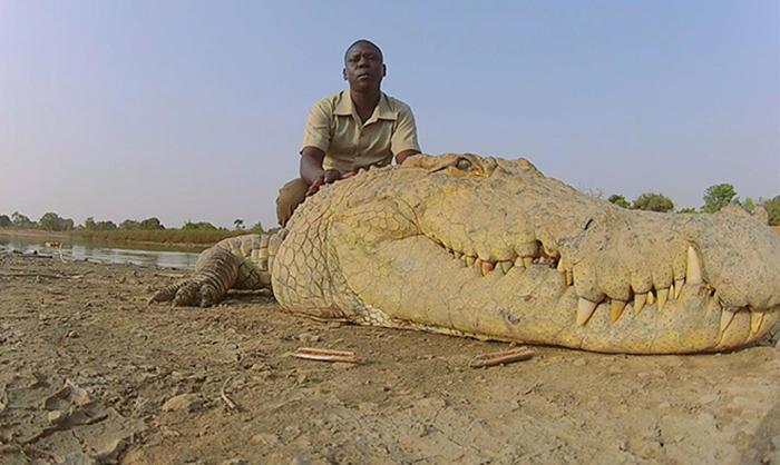 Священные крокодилы из Буркина-Фасо.