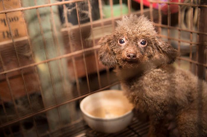 Когда нашли БиБи, она находилась в тесной грязной клетке.
