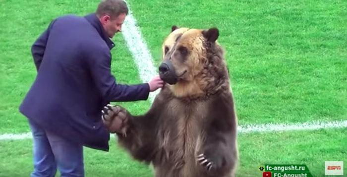 Дрессировщик дает медведю маленькое угощение за выполнение трюка.