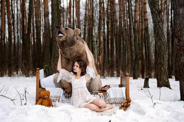 650-килограммовый медведь Степан. Фото: Ольга Баранцева.