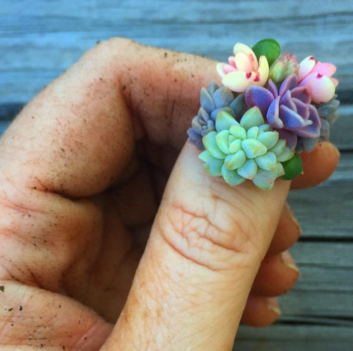 Суккуленты на ногтях.