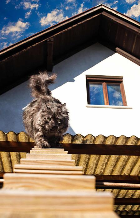 Кошки с удовольствием пользуются лестницами.
