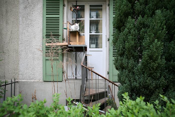 Всё для удобства кошки. Фото: Brigitte Schuster.