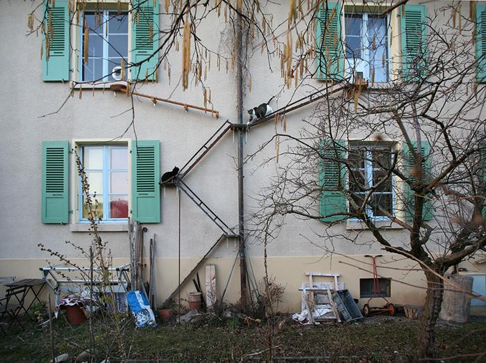 Общая лестница для двух котов. Фото: Brigitte Schuster.