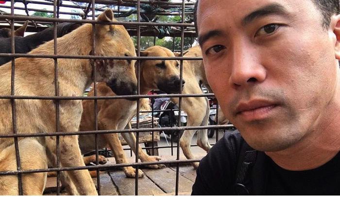 Марк Чинг и спасенные им собаки.