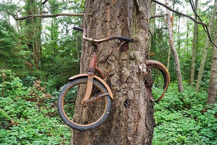 Велосипед, вросший в дерево на острове Вашон.