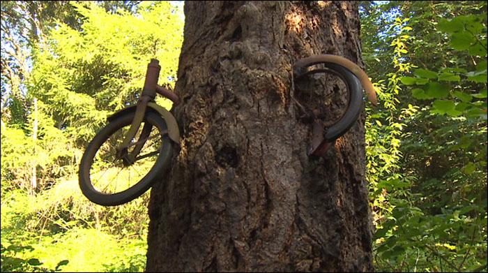 Дерево поглотило старый велосипед.