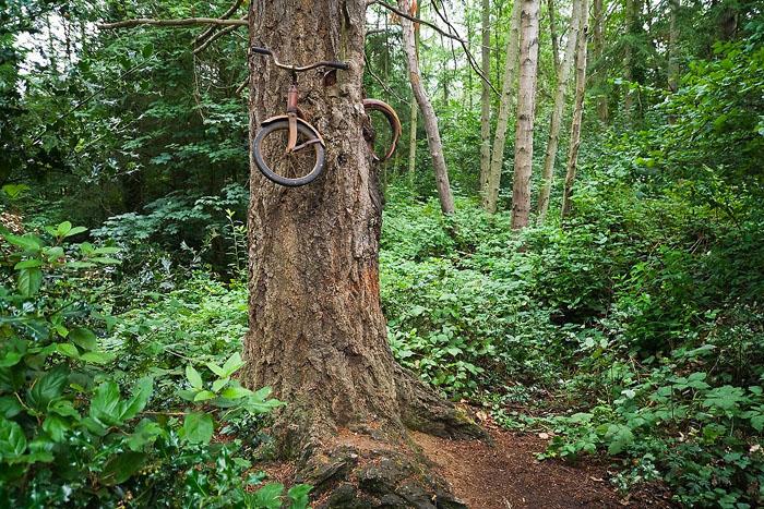 Велосипед врос в дерево на достаточно большой высоте.