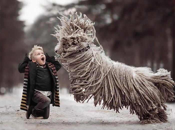 Комондор - крутая собака. Фото: Andy Seliverstoff.