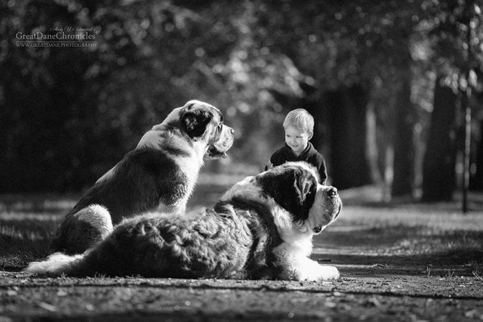 Маленькие детки и большие собаки.  Фото: Andy Seliverstoff.