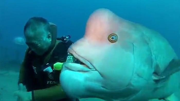 Хироюки Аракава под воду навещает свою подругу.