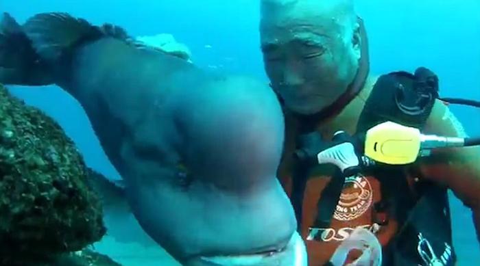 Удивительная дружба между человеком и рыбой.