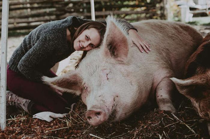 Домашняя свинка Теодор.