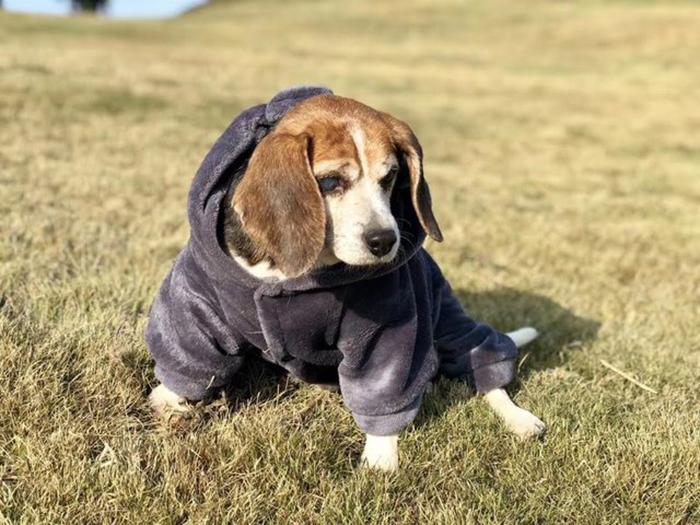 Собака раньше никогда не была на улице и ощущения прикосновения травы и тепла от солнца для нее - новые чувства.