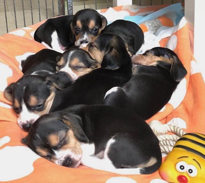 Если бы зоозащитники не забрали собак, то все они, включая нерожденных щенков, были бы просто убиты.