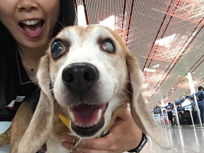 Сейчас собаку переправили в США, где у нее больше шансов найти себе дом.