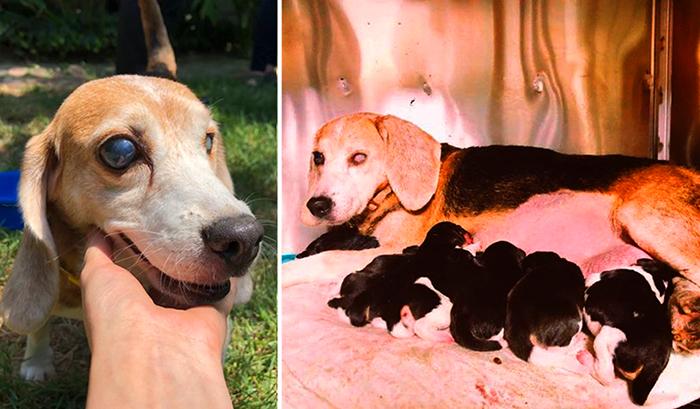 Спасенная собака по кличке Мария.