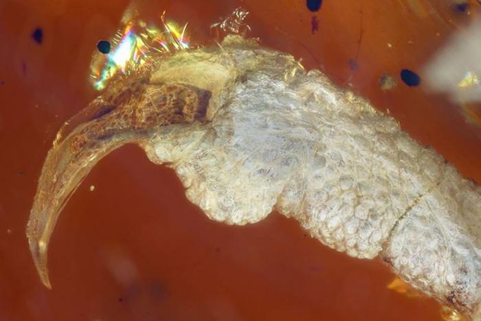 Птенец доисторической птицы.