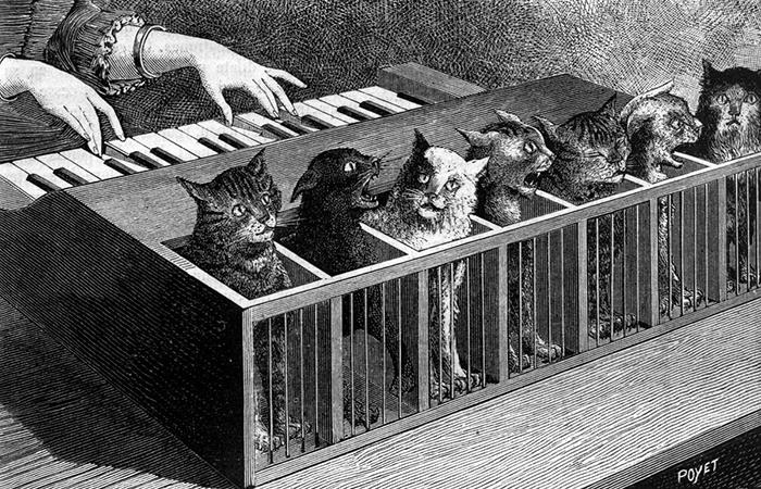 Кошачий орган.