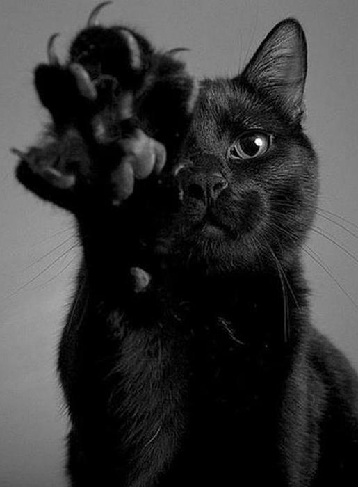 Черный кот считался спутником дьявола.