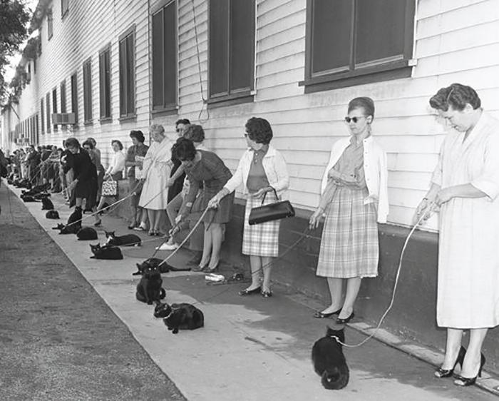 Кастинг черных котов в Лос-Анжелесе 1961 г для участия в фильме ужасов.