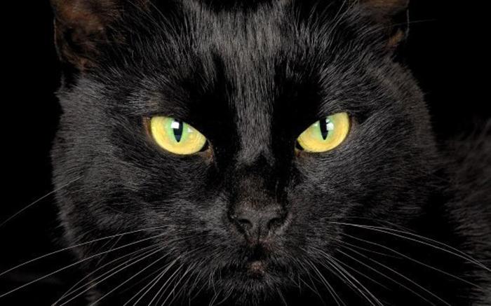 Существует ли проблема черных кошек и если да, то почему?