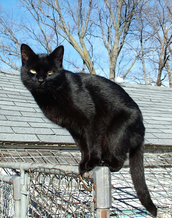 Черные коты.