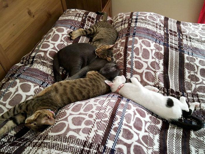 Слепые коты подружились со зрячими котами, которые уже жили в новом доме.