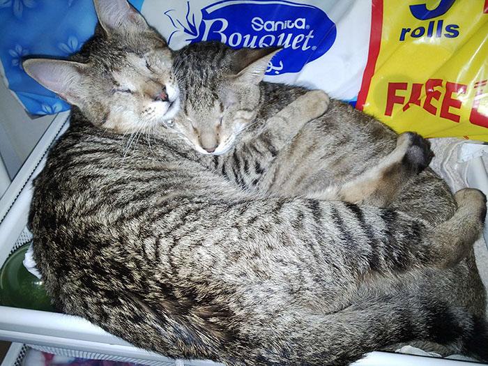 Слепые коты оказались очень дружными и не могли жить друг без друга.