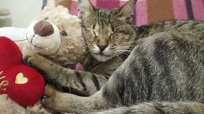 Коты быстро адаптировались в новом доме.