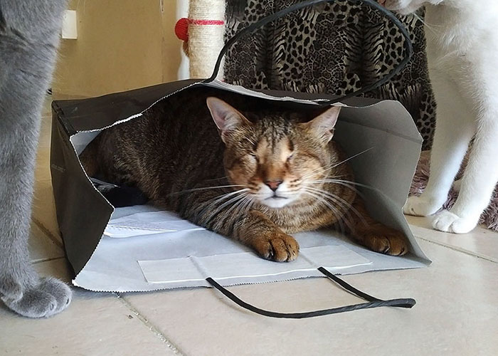 В новом доме коты познакомились и подружились с двумя другими котами, которые могли нормально видеть.