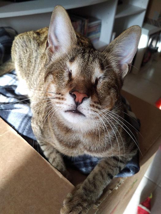 Брат Блу, один из троих слепых котов.