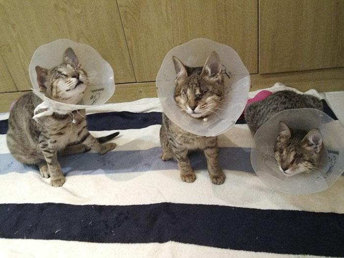Котам пришлось перенести операции, чтобы исключить дальнейшие проблемы с глазами.